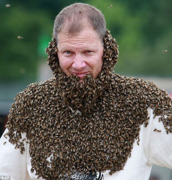 To Bee or Not To Bee (6 pics)