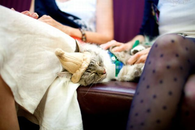 Cats in Haute Couture (35 pics)
