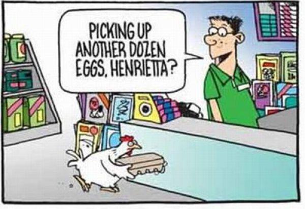 Desperate Chicken