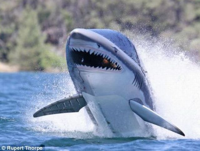 Jawride - Would You Ride a Shark? (9 pics)