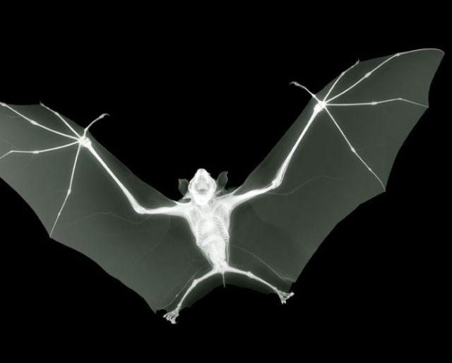 Beautiful X-Ray Photography (30 pics)