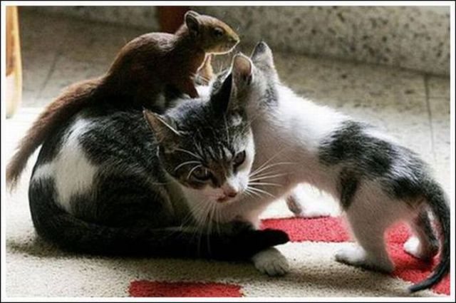 Cats and a Squirrel (10 pics)
