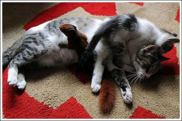Cats and a Squirrel (10 pics)