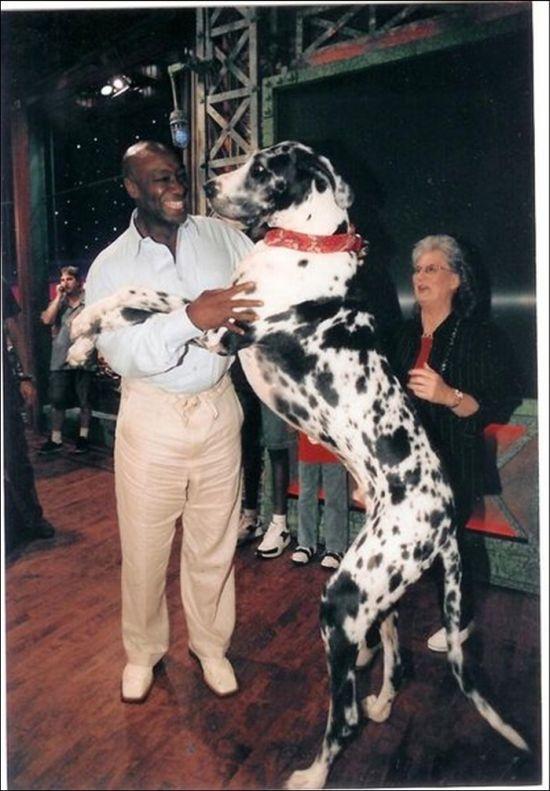 Huge Dogs (19 pics)