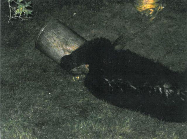Great Bear Rescue (10 pics)