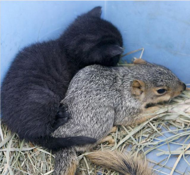 Cats and Squirrels (10 pics)