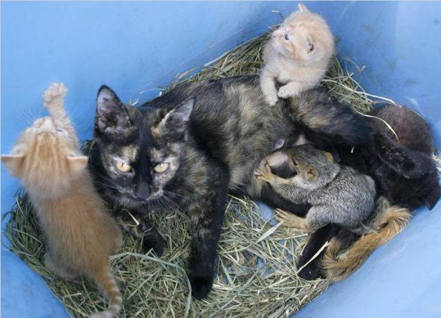 Cats and Squirrels (10 pics)