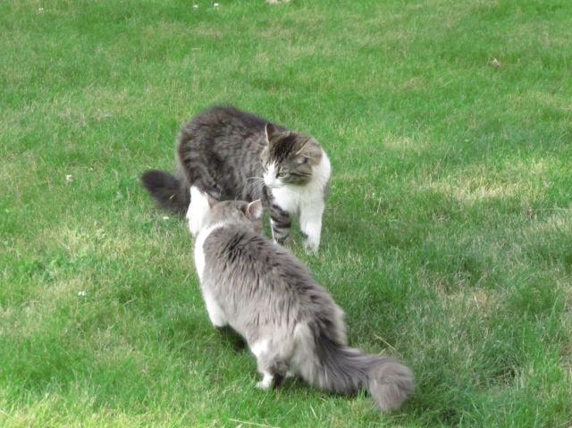 Cats (15 pics)