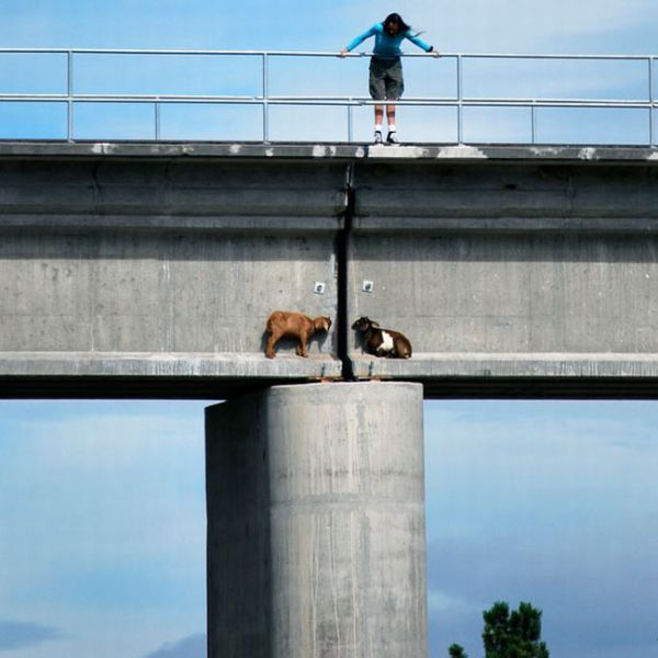 Unusual Bridge Passersby (3 pics)