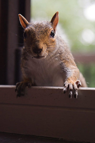 Such a Friendly Squirrel (7 pics)