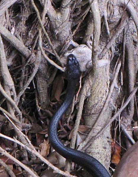 Toad vs. Snake (28 pics)