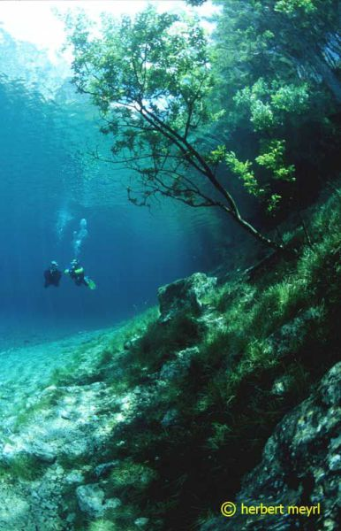 Beautiful Underwater Meadow (28 pics)