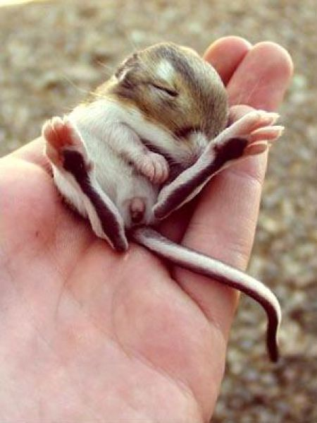 These funny animals (43 pics)
