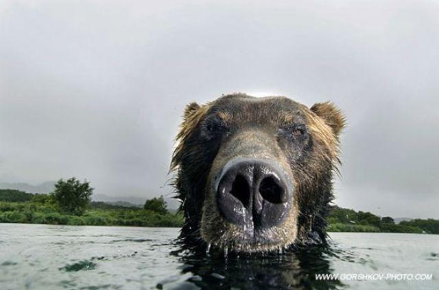 Teddy Bears (88 pics)