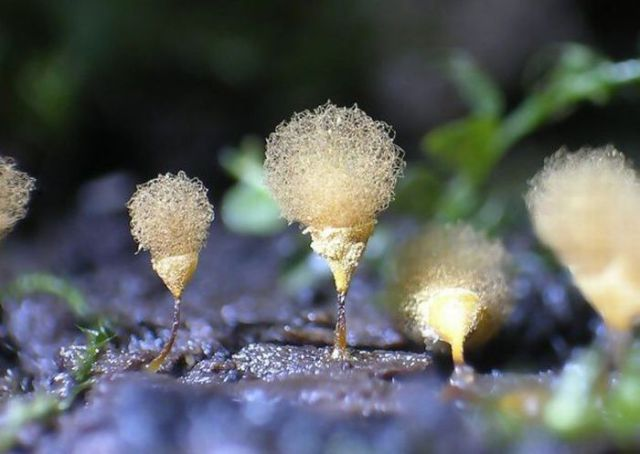Who Knew Mushrooms Could Be So Beautiful? (63 pics)
