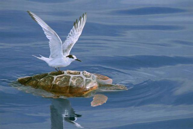 Beautiful Nature Photographs (28 pics)