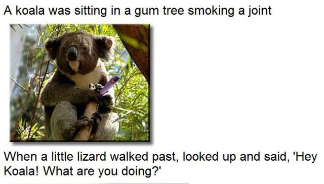 A Koala and a Lizard Were Smoking a Joint..
