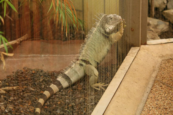 Wild and Crazy House Pets (60 pics)