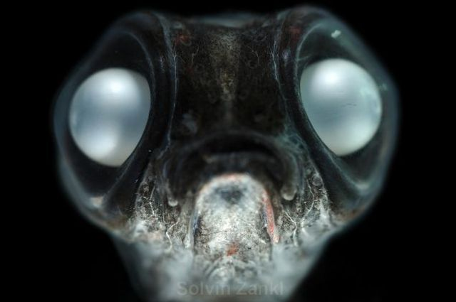 Deep Sea Monsters (32 pics)