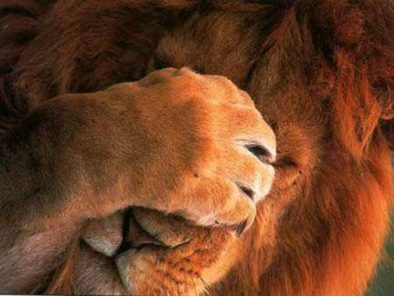 People and Animals: Hilarious Facepalms (40 pics)