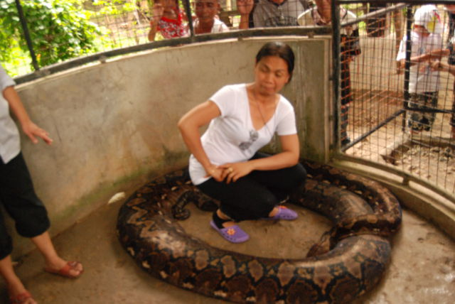 Prony the Python (6 pics)