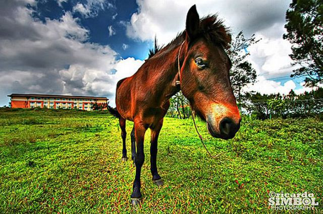 Beautiful HDR Photography of Animals (60 pics)