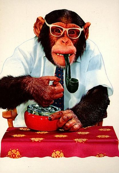 Monkeys Who Smoke (25 pics)