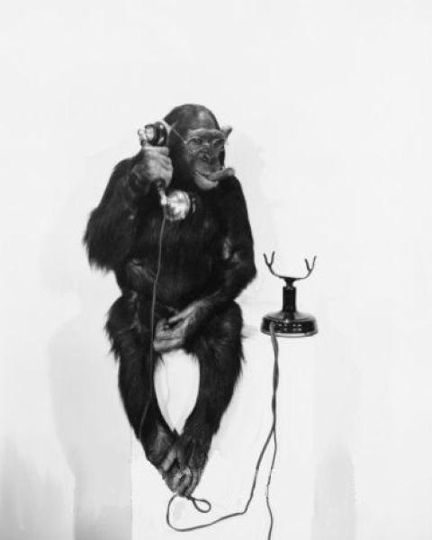 Monkeys Who Smoke (25 pics)