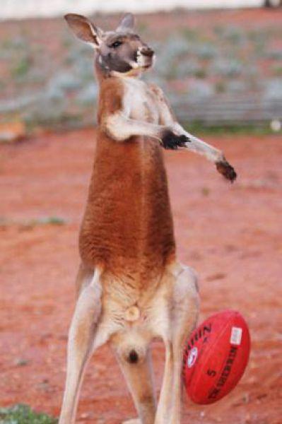 A Hoppity Pet (28 pics)