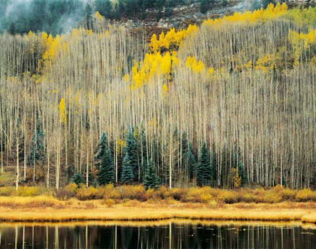 Amazing Nature Photos (59 pics)