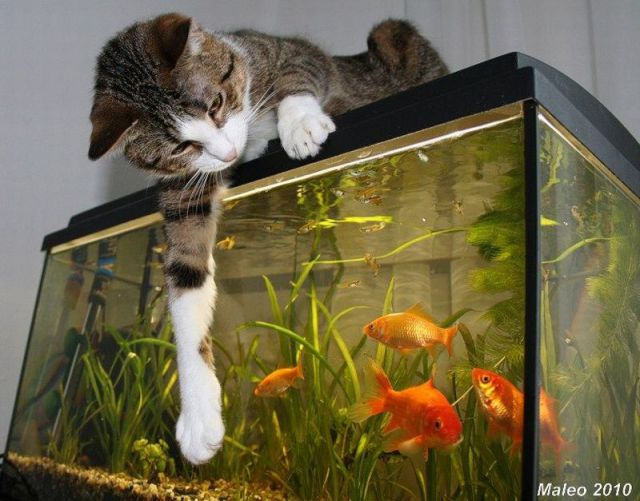 These funny animals (46 pics)
