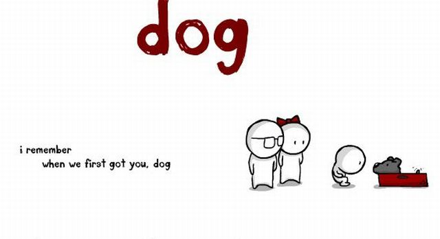 Story of The Dog (1 pic)
