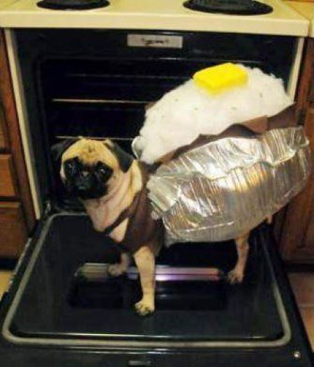 The Food is Going to the Dogs (53 pics)