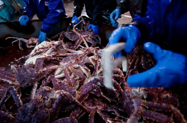 Scenes from the Deadliest Catch (31 pics)