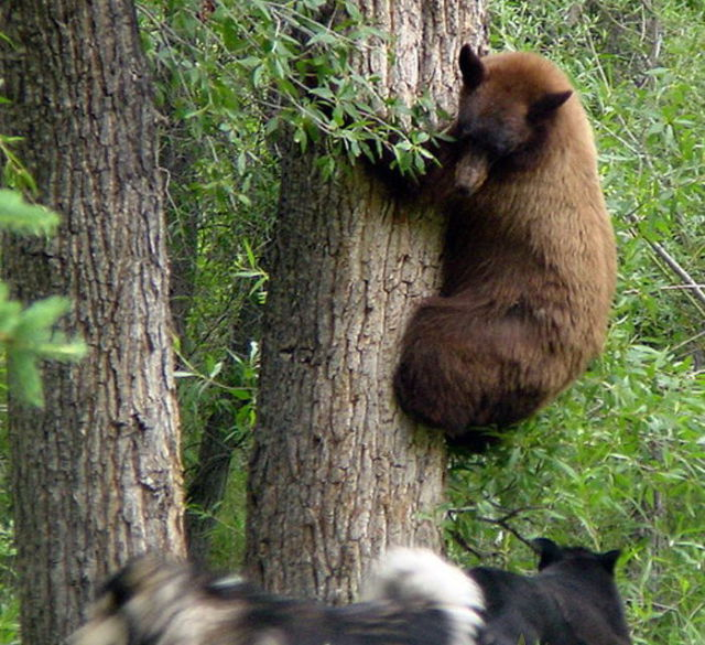 Bears Pay a Visit to Tourists (6 pics)