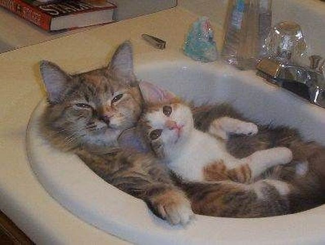 These funny animals (49 pics)