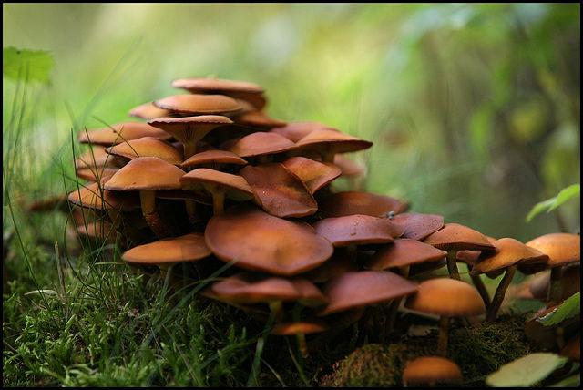 Nature in Belgium (15 pics)