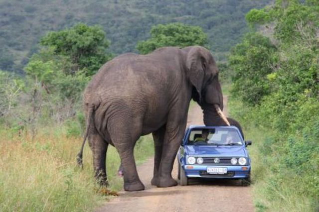 Cars and Animals (22 pics)