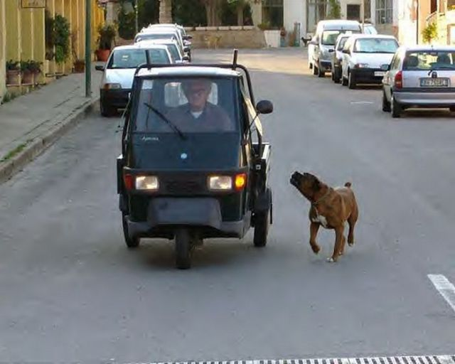 Cars and Animals (22 pics)