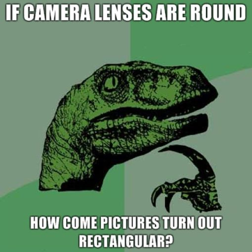 Philosoraptor and His Perplexing Questions (21 pics)