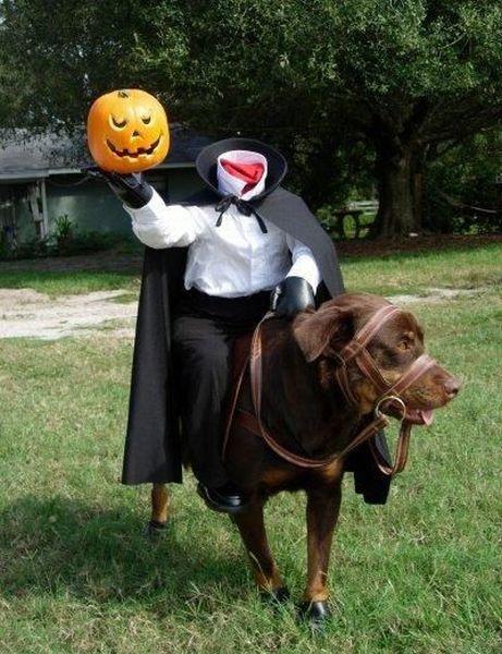 Happy Halloween! (56 pics)