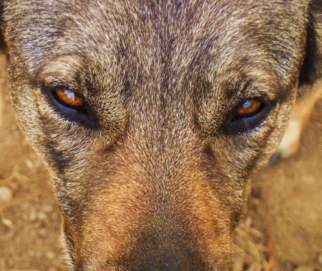 my dog eyes (1 pic)