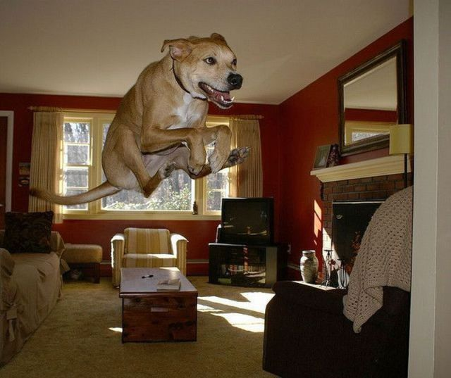 These funny animals (38 pics)