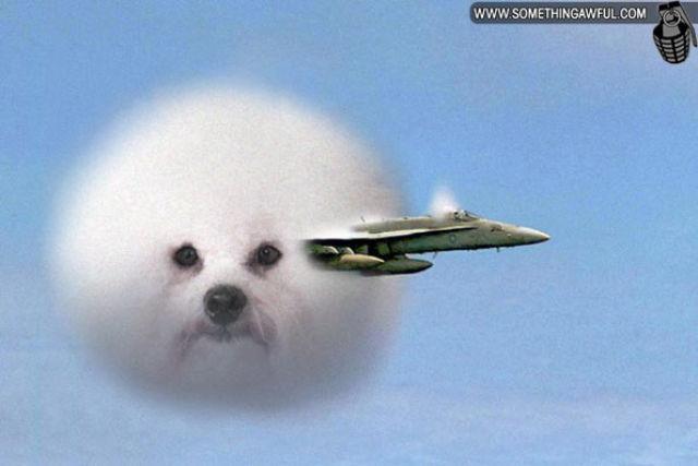 Puff Dog Meme (30 pics)