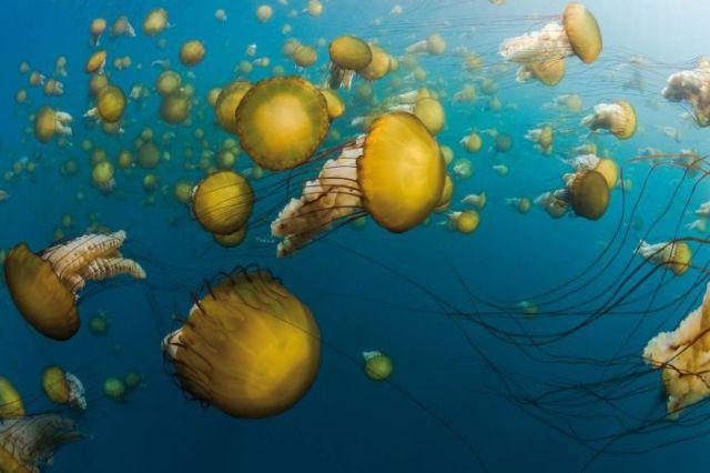 Life Underwater