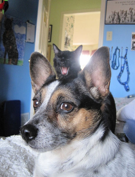 Animal Photobombs