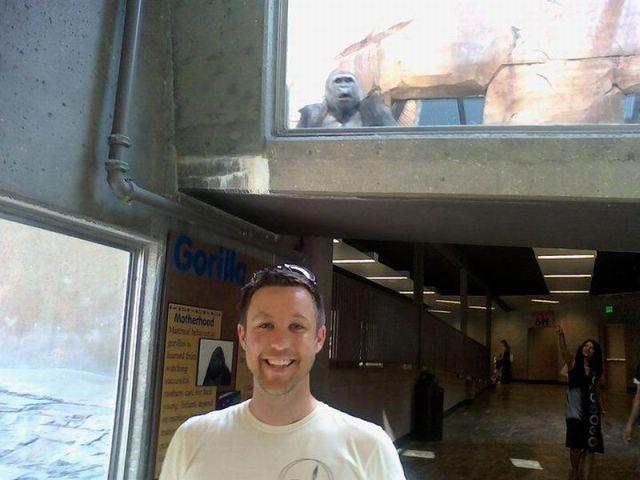 El Jodefotos del día es un gorilla en el zoo