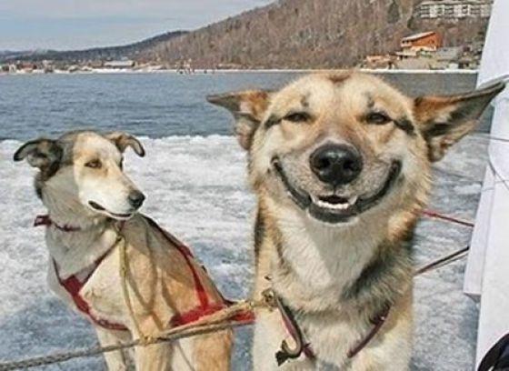Druggie Doggies