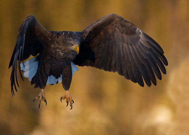 Amazing Animal Close-ups