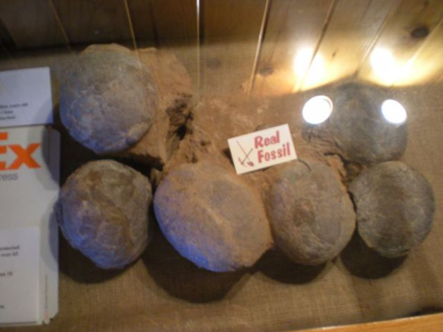 Wanna Ship Dinosaur Eggs?